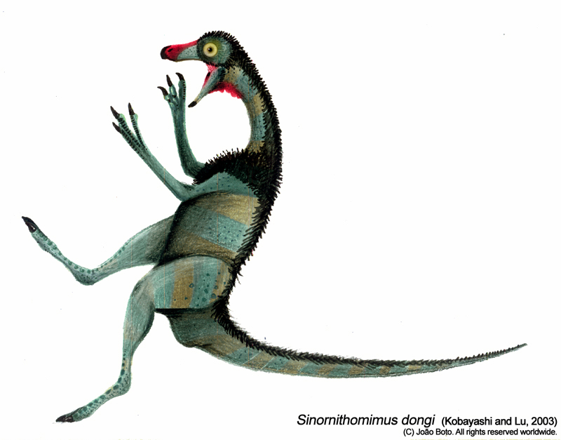Sinornithomimus dongi by Sputatrix