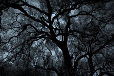 Single Tree - Sistema Nervioso by rasecphotograpy