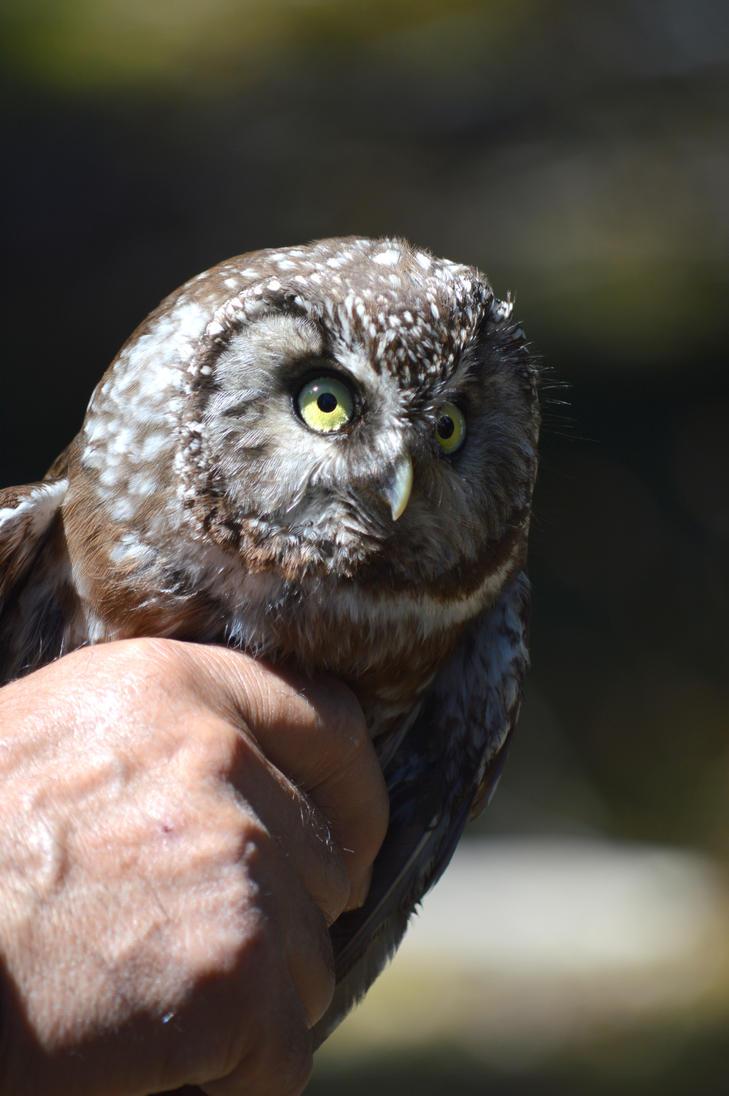 Speed dating owl