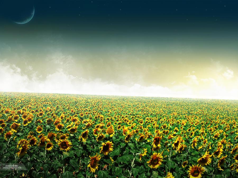 Sunflowers by Joker84