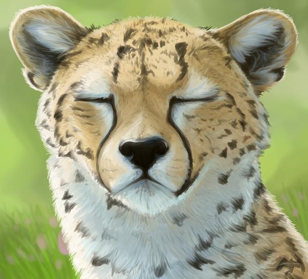 Sleepy Cheetah 1 by Fireshrike