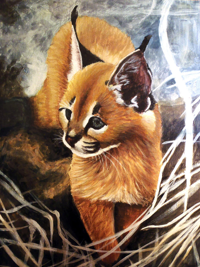 Caracal by Meorow
