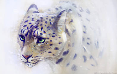 Comm - Snow Leopard