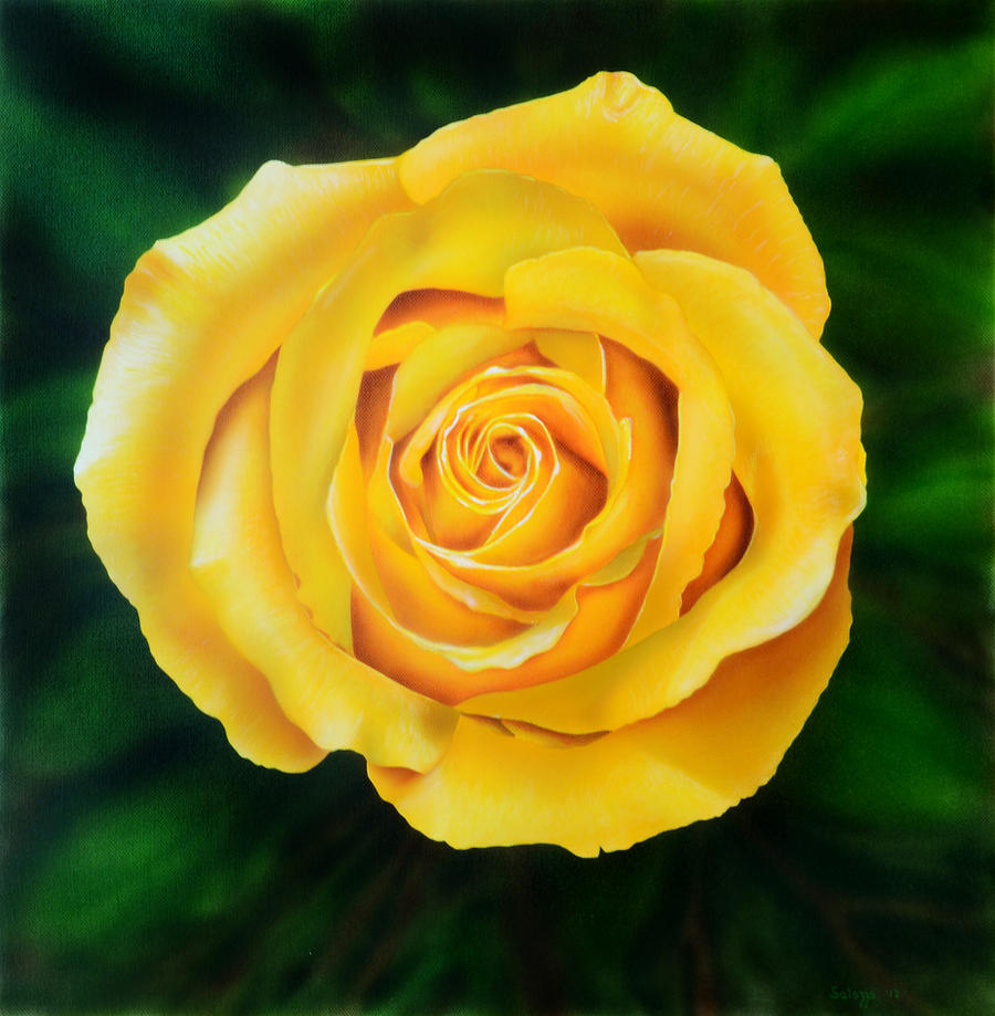 Yellow Rose Drawing Yellow rose of missouriby