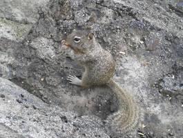 Little Nut