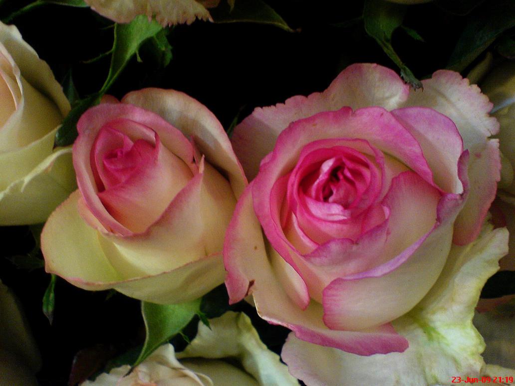 Color Of Flowers by Alikocholo on DeviantArt