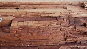 Texture arbre ecorce 8