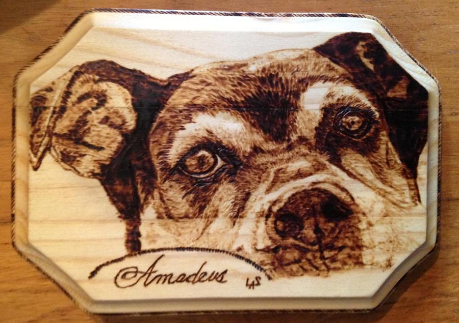 Amadeus by H20dog