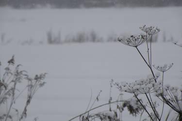 Winter on 117 003