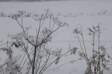 Winter on 117 004