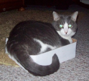 tai-fire-cat's Profile Picture