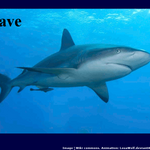 Support Sharks, Stop Finning by LouaWolf