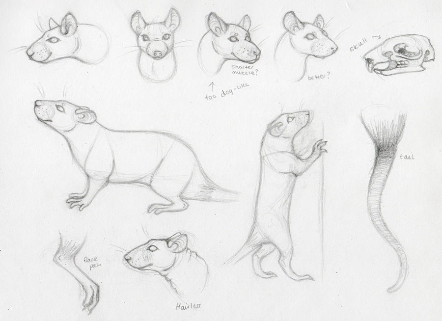 how to draw a rat standing up
