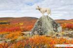 Dog Fall Colors