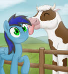 Licked by a cow