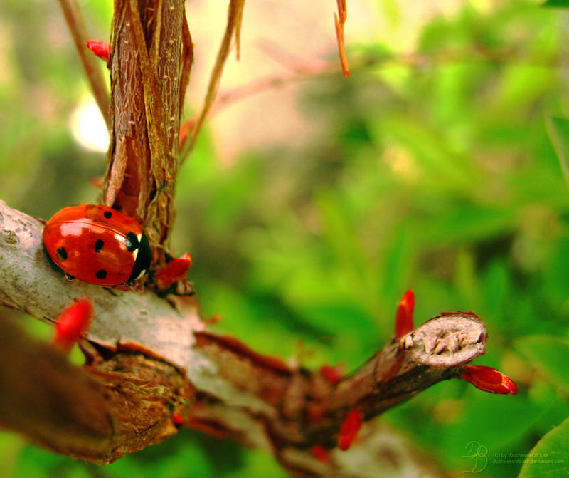 Little Ladybird by DuchesseOfDusk
