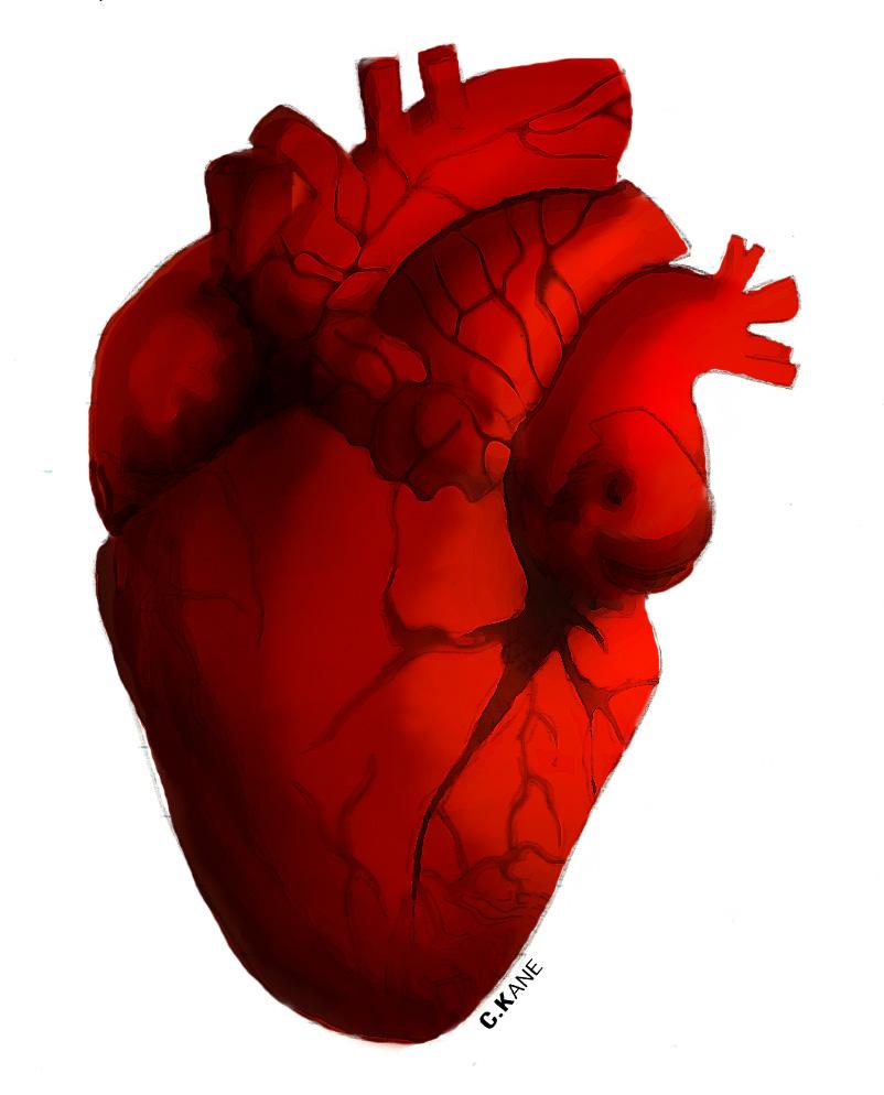 free clip art human heart - photo #1