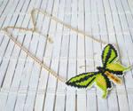 Ornithoptera Paradisea