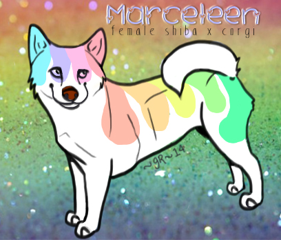[Meet Marceleen, the painted Shiba Mix!] by patchesthepheonix