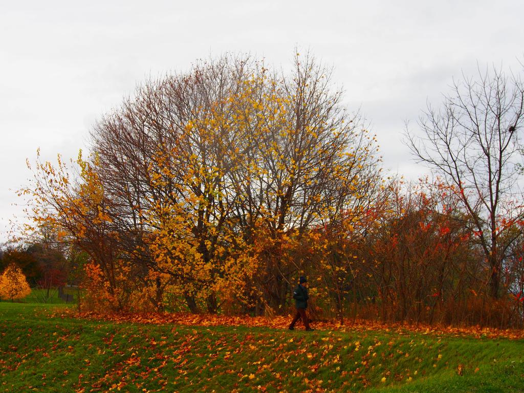 Nature of orange by doggywoods