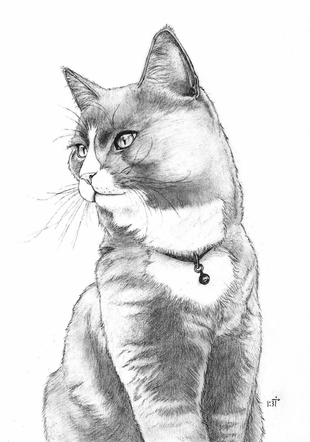 Mr Cat by Bastet-mrr