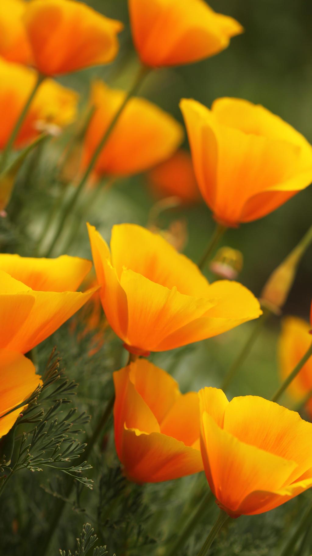 Orange world by Bastet-mrr