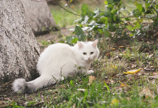 White cat by tree