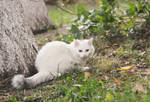 White cat by tree by Bastet-mrr