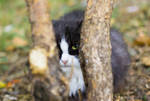 I see you by Bastet-mrr