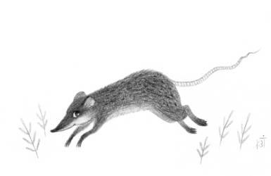 Rat Julius by Bastet-mrr