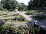 20200615 St annes Ashton Park Rose garden