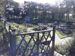 20201008 St Annes park - rose garden