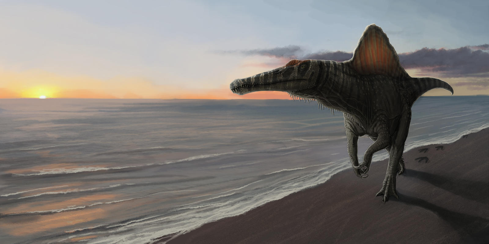 Paleo art - spinosaurus by FabrizioDeRossi