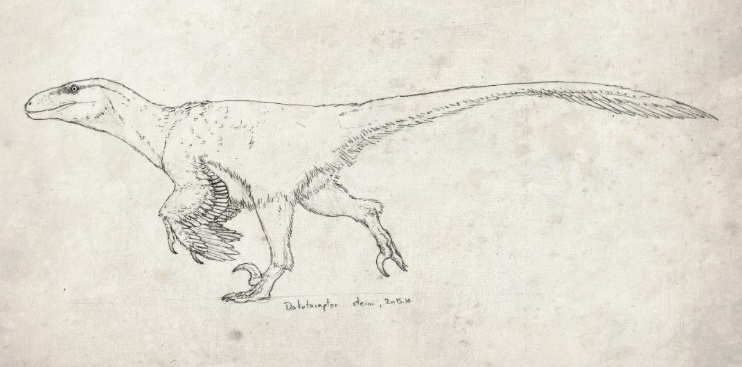 Dakotaraptor doodle by FabrizioDeRossi