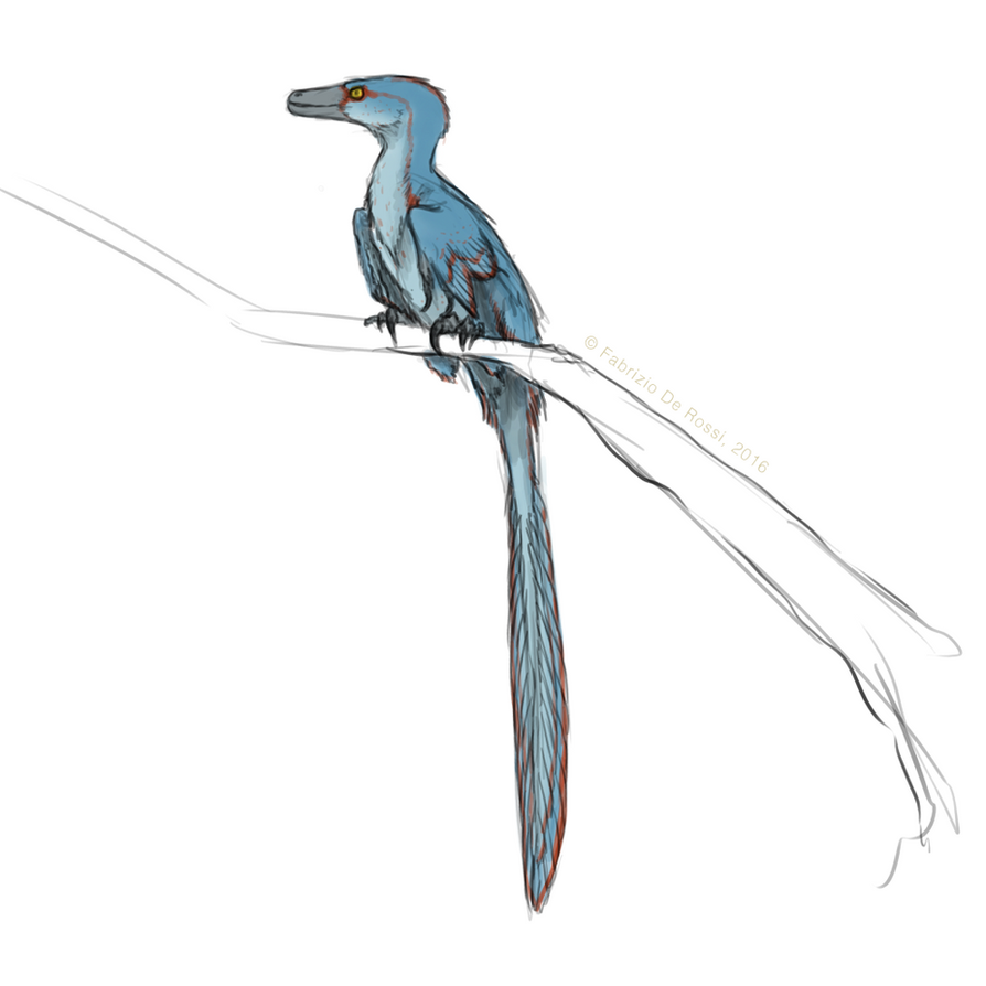 Cricket on a branch -  sketch by FabrizioDeRossi