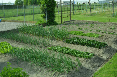 My vegetable garden by spinngewebe