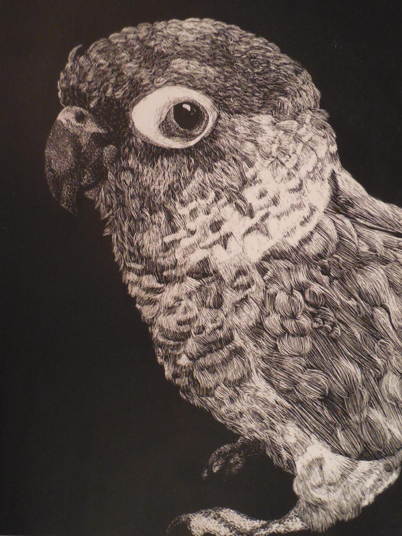 Little bird by evangeline40003