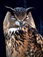 Great Horned Owl by evangeline40003