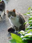 Farm Cat!