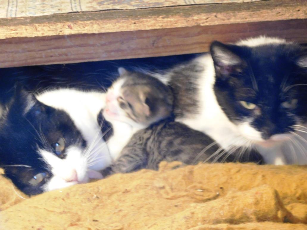 kittens, Kittens- farm kittens by evangeline40003