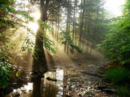 Golden Leaves #PhotoChallengeLandscapes by evangeline40003