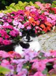 Flower-Kitty