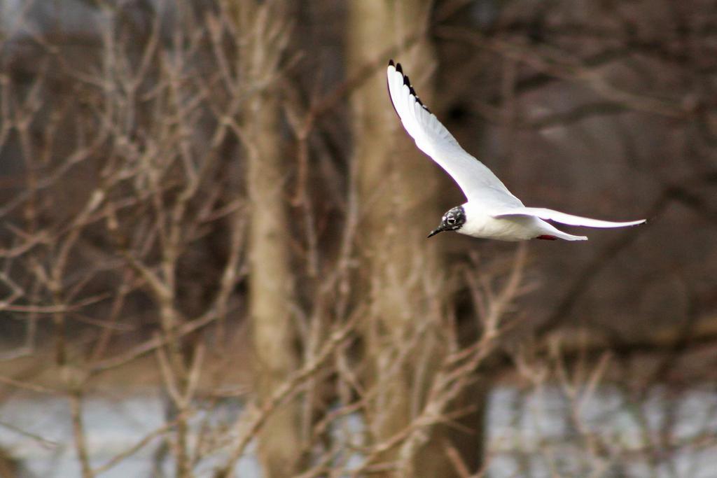 Flying Birb