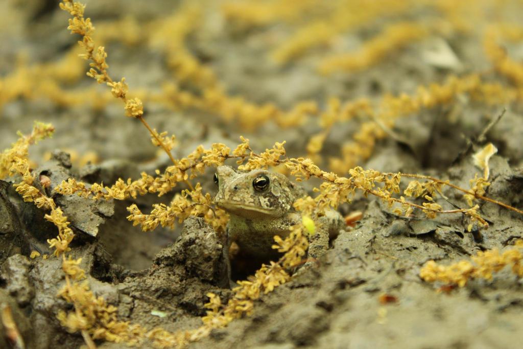 Happy Toad