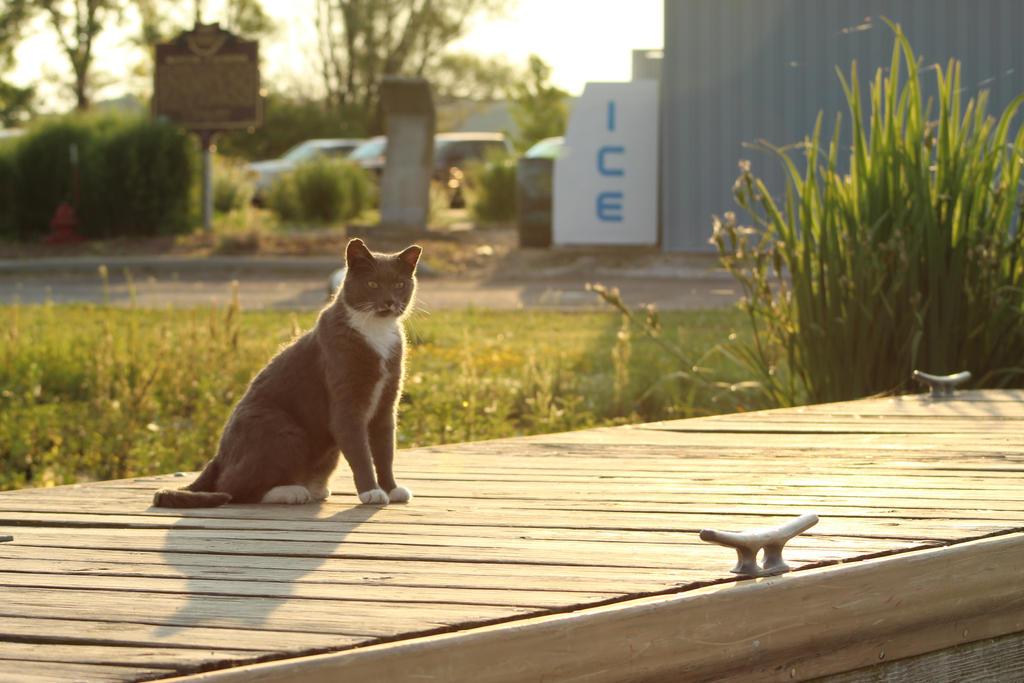 Kitty-Kitty on the Dock