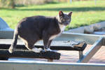 Boat Cat by Evangeline40003