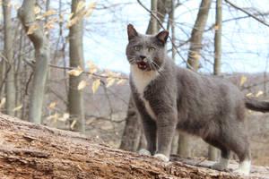 Kitty-kitty Meow