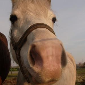 denisesilver's Profile Picture