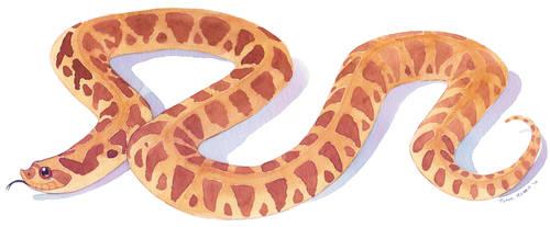 (Watercolor) Hognose Snake