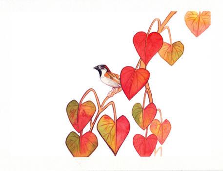 (Watercolor) Vine Sparrow